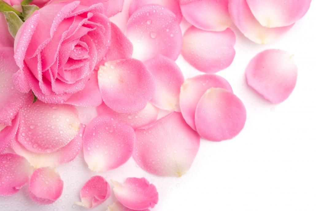 گل رز و کاهش اضطراب